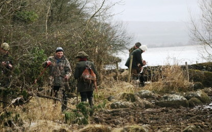 Hunting and shooting pheasants